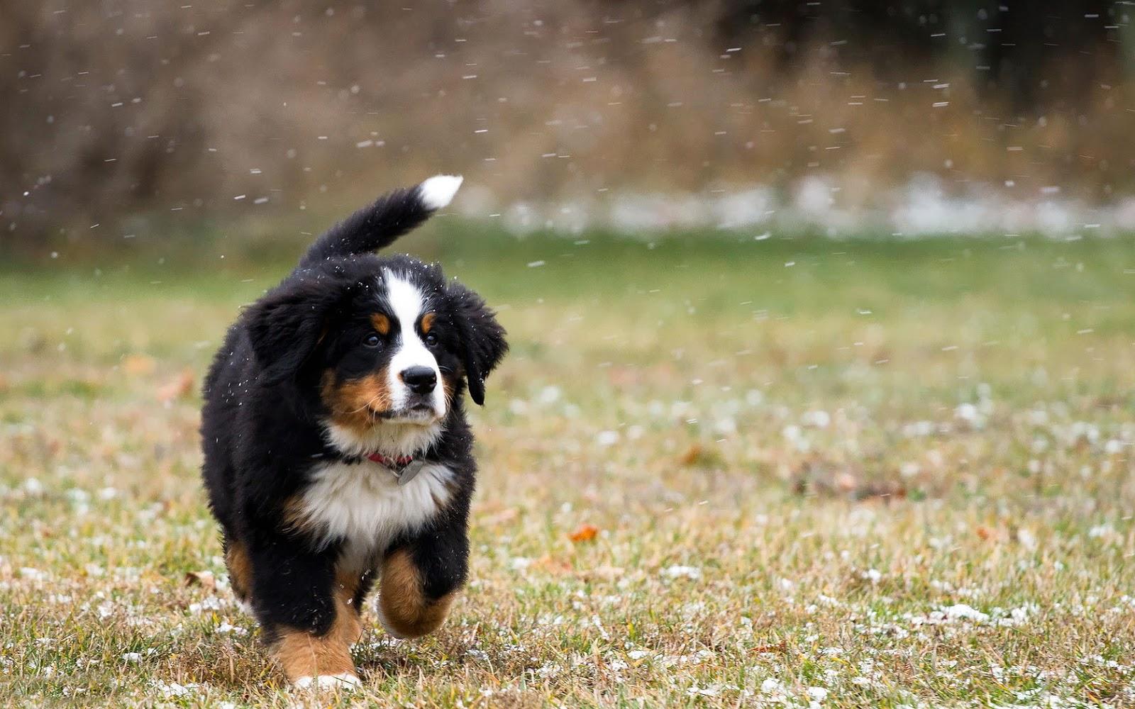 Cuccioli di allevamento: come mi devo comportare?